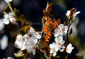 Comma by AzureWindProductions