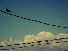 Lonely bird_2 by noohohIcant