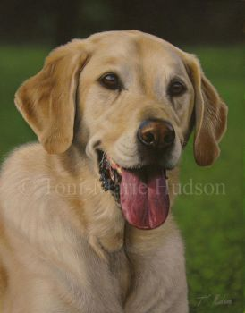 Woody - Yellow Labrador by Canis-Lupess