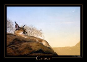 Caracal for Caracal by ewm