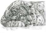 Snow Leopard ... by sschukina