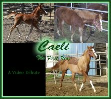 Caeli- A Video Tribute by SharysAogail