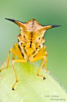 Treehopper by ColinHuttonPhoto
