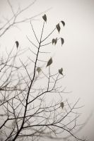Nature morte - 4 by matmoon