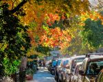 Mile-End Autumn by Kitteh-Pawz