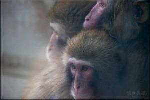 Macaques by BFGL
