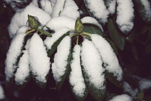 First Snow 2 by amandaehr