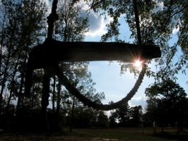 Silhouette Swing by pearchel