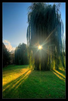 The wishing willow by blessedchild