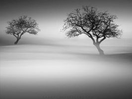 Misty Tree Sea by YahavT