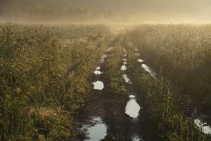early in the morn gold road by StargazerLZ