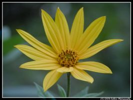 Flowers 32 by Timm45