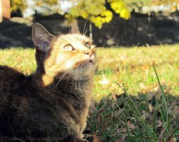 Curiosity Looking Up by EuphoricPhotographs