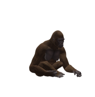 Gorilla Female Png Stock 1 by Direwrath