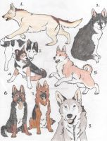 DOGS ADOPTABLES :CLOSE!: by ZoeyTheAussie