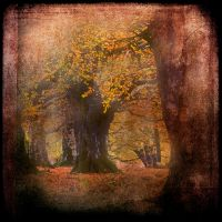 Dream Leaves.. by hearthy
