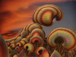 Mushrooms at Sunset by SuicideBySafetyPin