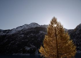 Shine Pine by bellaricca