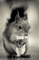 hungry squirrel by moussee