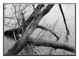 Branches in water by saltov-man