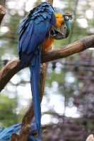 Parrot Stock 02 by Malleni-Stock