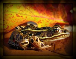 Leaf Pad Frog by SandieBlair