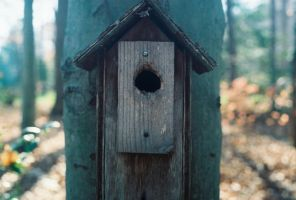 Birdhouse by LeftSideOfRight