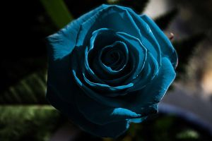 .:Blue Passion:. by WhiteSpiritWolf