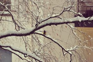 Winter Tale by LindaMarieAnson
