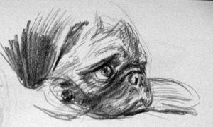 Pug 2 by Gygaxis