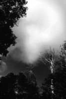Smoke from Heaven by notworthly