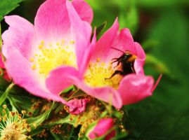 Pollination by PhotoHunny