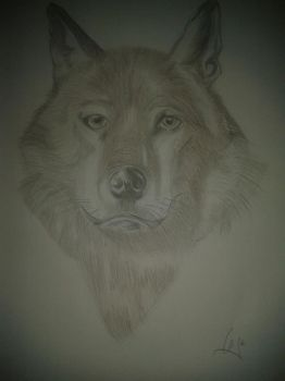 wolf by calzimer