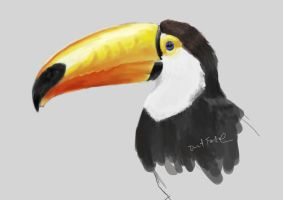 Toucan by DarkTime005