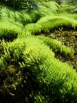 Moss by Thor899