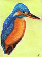kingfisher - chalk pastel by zimtxstern
