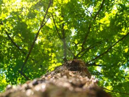 Looking Up Trees 2 by Metalmixer