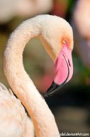Flamingo II by amrodel