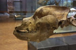 cave bear by bookscorpion