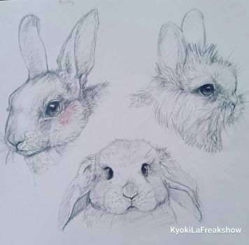 bunny sketches  by KyokiLaFreakshow