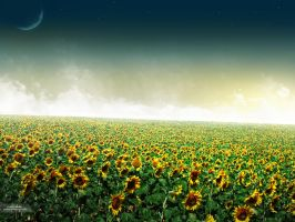 Sunflowers by Joker84