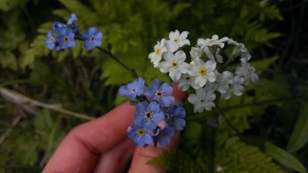 Amazing and never before seen, white forget me not by welcometoreality