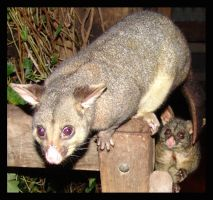 yep you guessed it.... by yepyepyep
