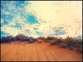 Desert Grass by WillTC