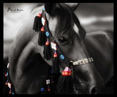 Arabian horse 2 by Ahmed-Matrix