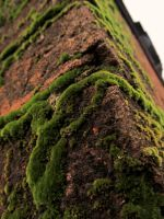 Moss on a Brick by Bremsstralung