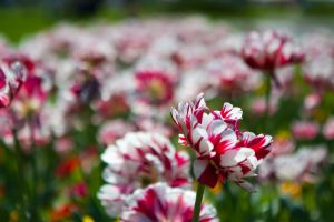 Flowers4 by misterCromat