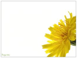 dandelion two by soozn