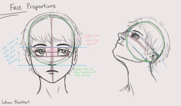 Face Proportions Diagram by Leharc--BlueHeart