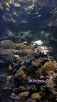 Aquatic Background 15 by ALP-Stock